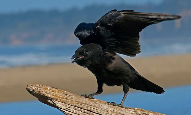 Raven Costumes for Women and Men